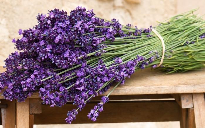 Купить цветы оптом обнинск подарок однокласснику на 14 февраля