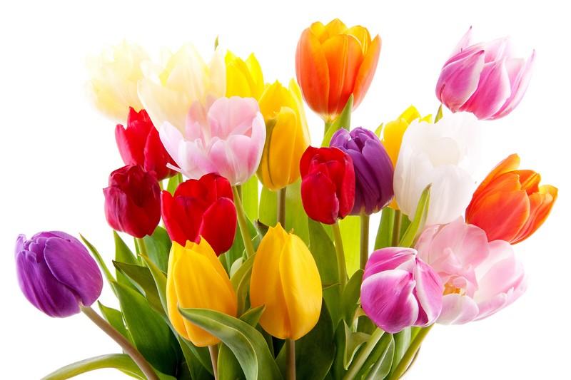 Купить тюльпаны оптом к 8 марта спб доставка цветов по красноярску недорого