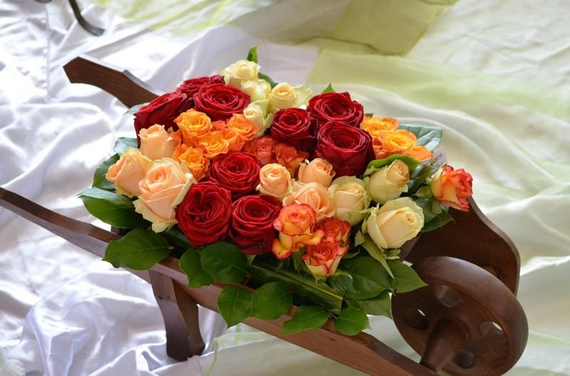 Купить в красноярске цветы оптом интернет магазин садовых растений и цветов доставка по украине