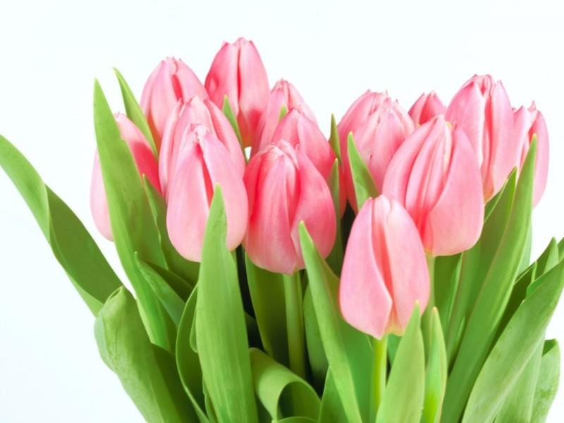 Купить цветы мурманск декоративные цветы купить москва