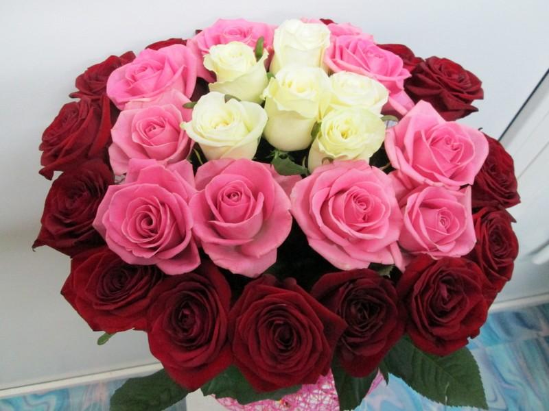 Азалия доставка цветов томск цветы в чернигове с доставкой