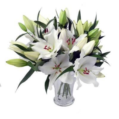 Цветы владикавказ оптом