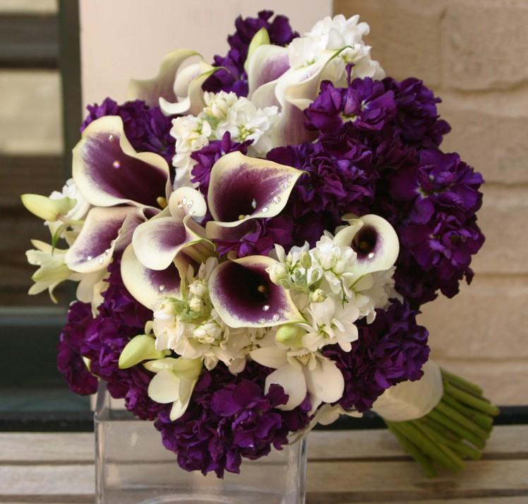 Цветы ирги где купить где купить цветы бишкеке