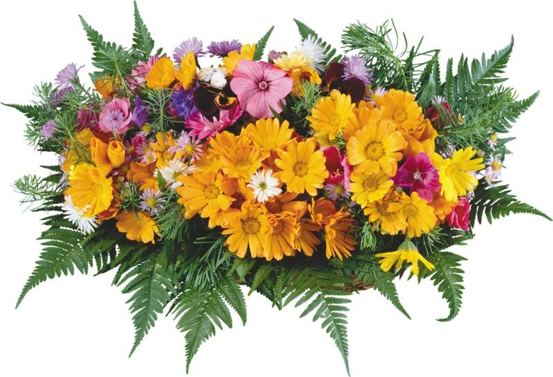 Живые маки купить цветы